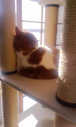 ブログNo.531(お蔵入り猫画像発掘!最終章)2