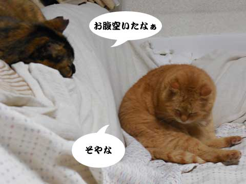 16_03_30_1.jpg