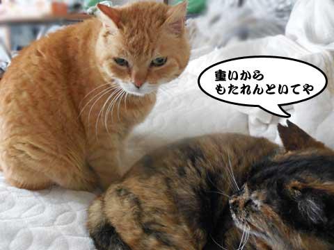 16_04_01_1.jpg
