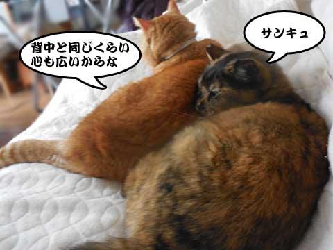 16_04_01_3.jpg
