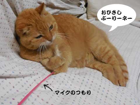 16_04_07_1.jpg