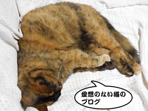 16_04_09_2.jpg