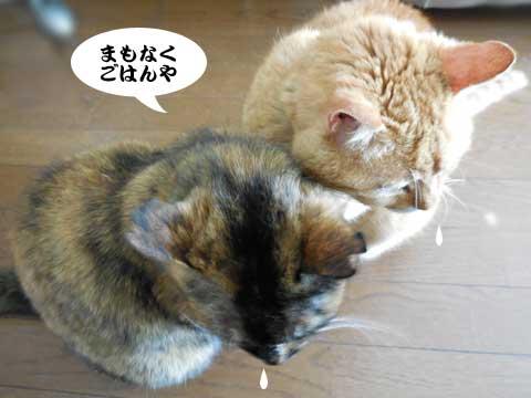 16_04_11_3.jpg