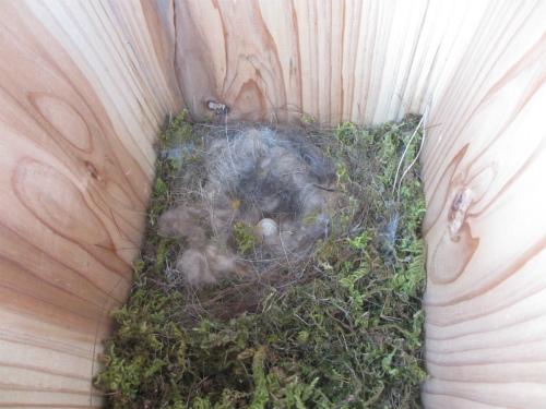 四十雀の巣