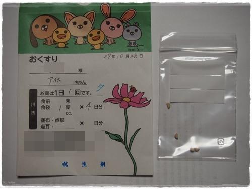 PA285794.jpg