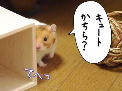 hatu5_20151025194137e56.jpg