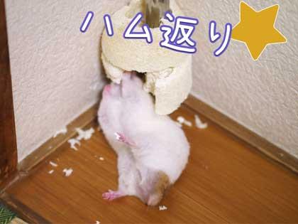 sanshou5.jpg