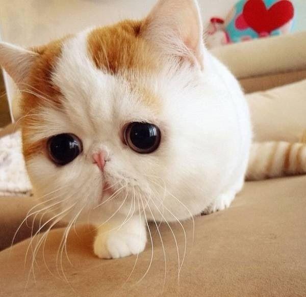 フリー素材 猫②