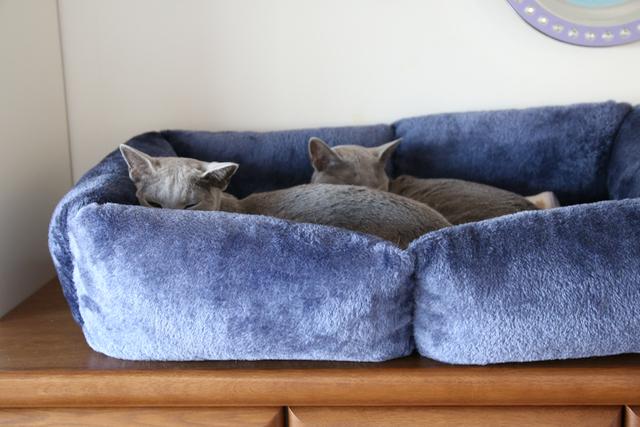青いベッド