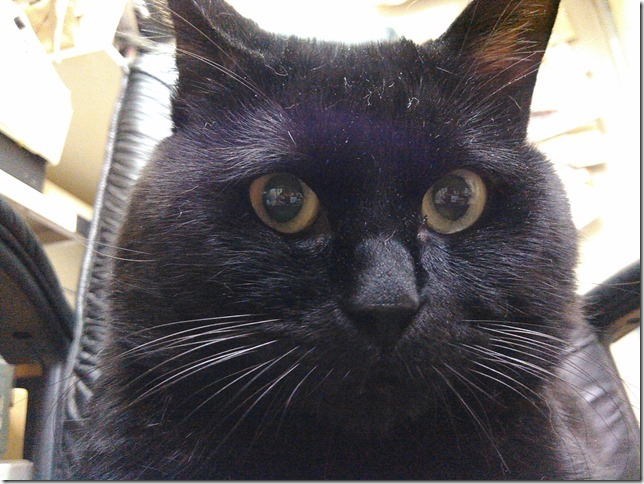 黒猫のオーダーメイド