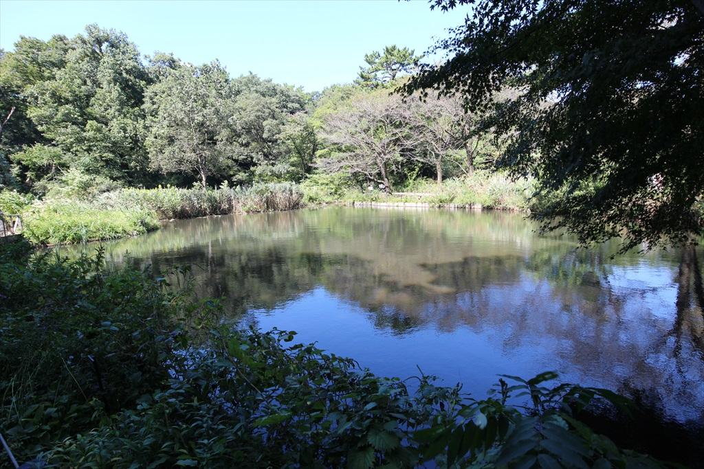 水生植物園の池