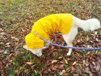 雨の日散歩 (1)