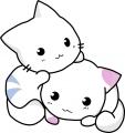 ネコ・双子の白