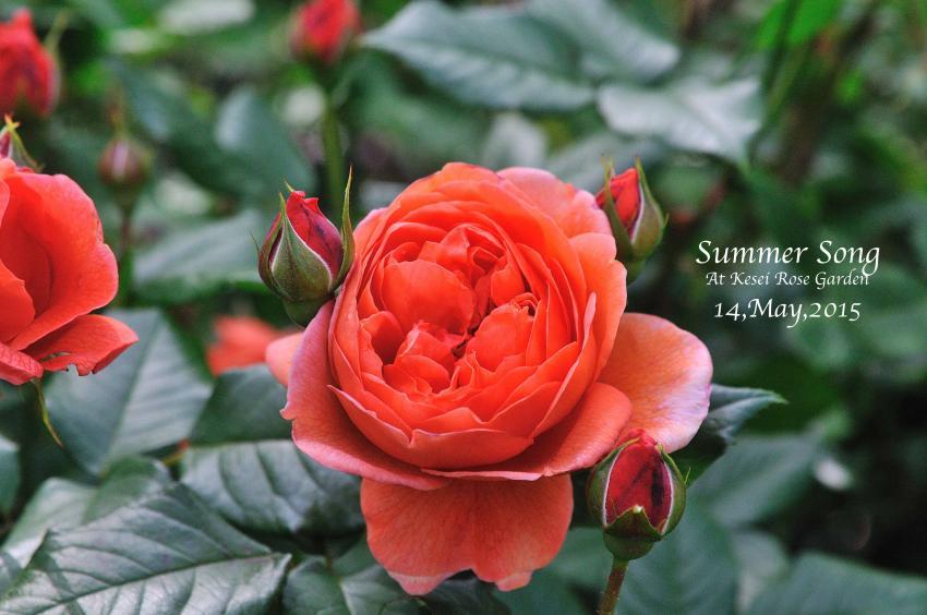 DSC_1834-L_convert_20150910124731.jpg