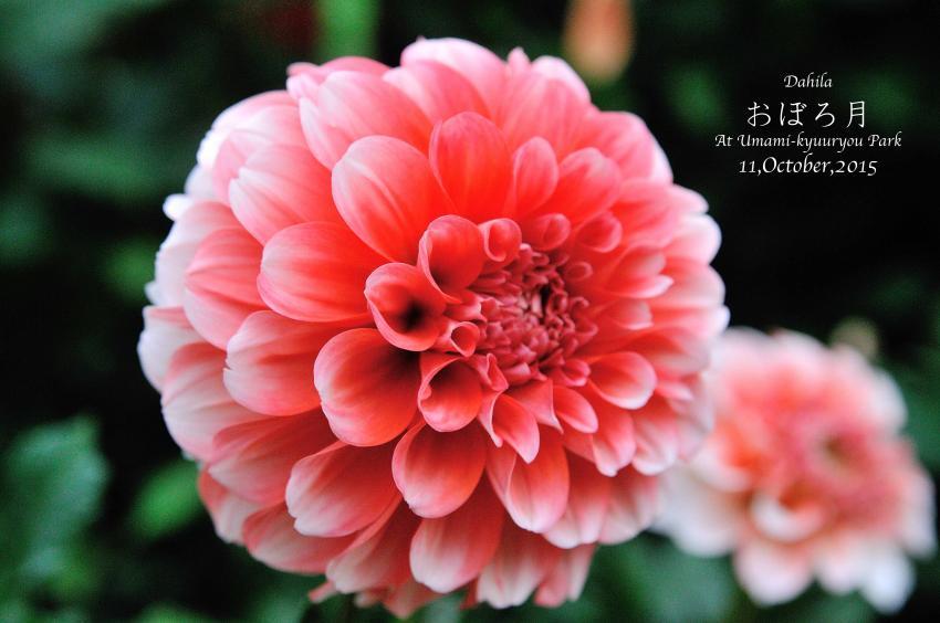 DSC_8708-L_convert_20151014072842.jpg
