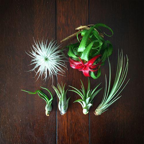 ゆうブログケロブログ植物に夢中 (12)