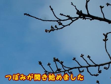 P3194678a.jpg