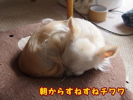 blog7332a.jpg