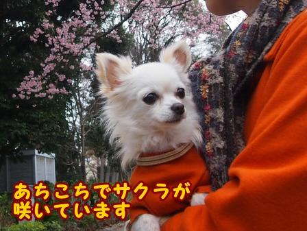 blog7334a.jpg