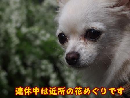 blog7351a.jpg