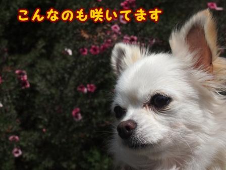 blog7359a.jpg