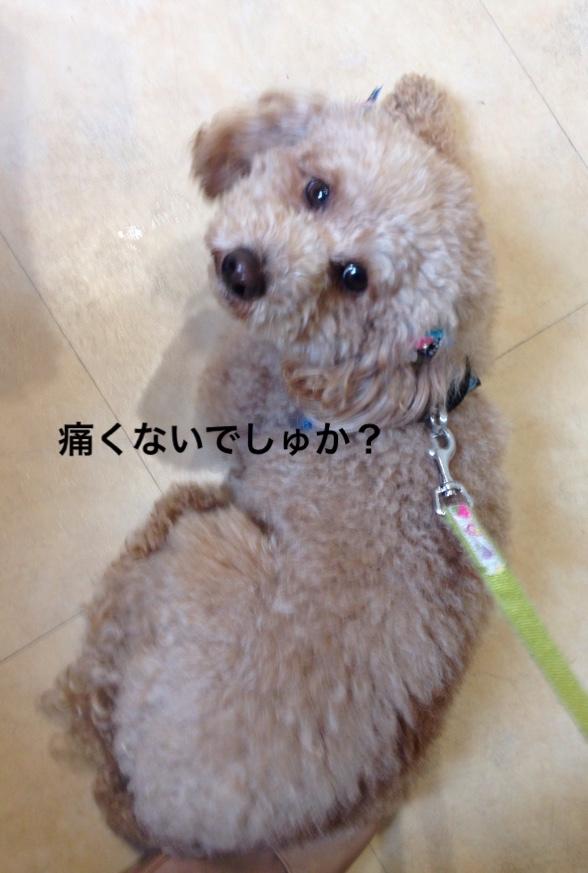 fc2blog_2016041021564396d.jpg