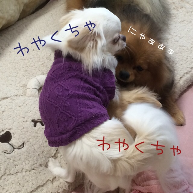 201603181153484dd.jpg