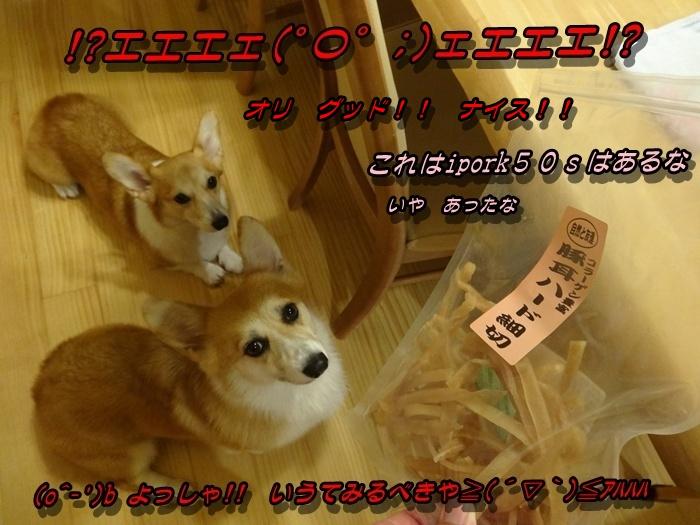 DSC08448_20151103011516267.jpg
