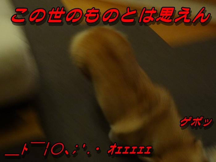 DSC09416_20151124092058ecc.jpg