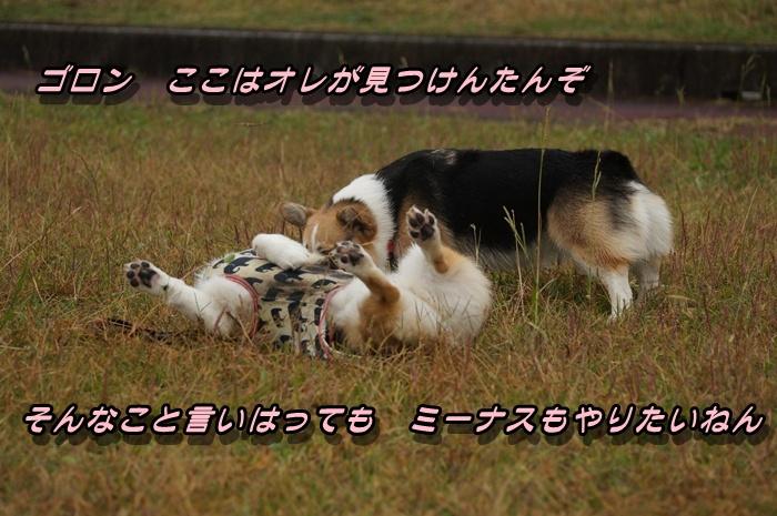 DSC09573_2015110920231647e.jpg