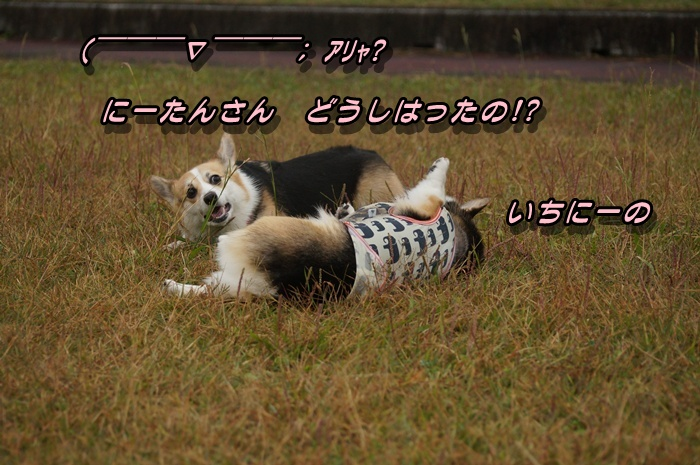 DSC09583.jpg