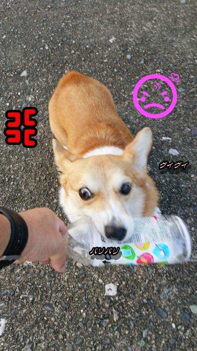 DSC_0604.jpg