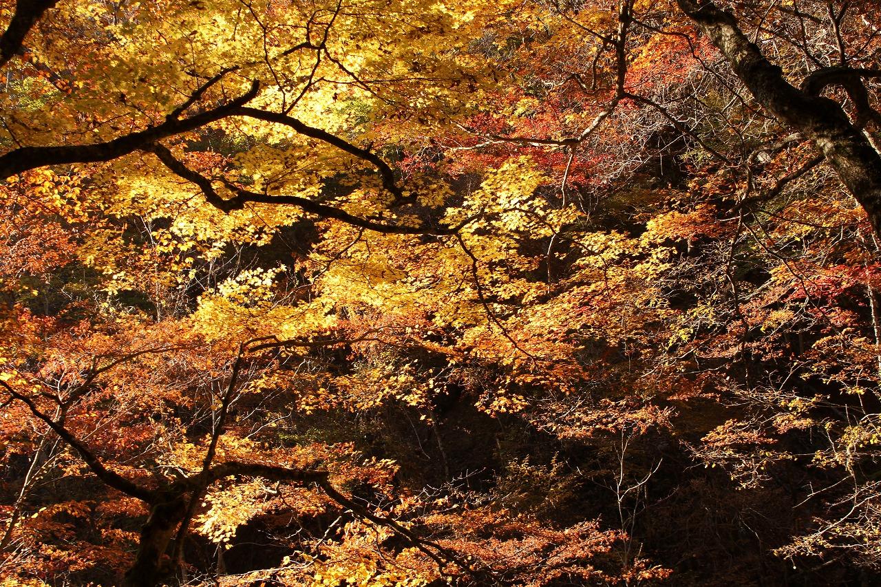 shuku-IMG_0463.jpg