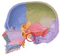 蝶形後頭軟骨結合(横から)