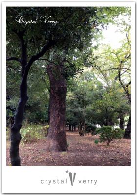 駒沢公園 妖精のいる場所