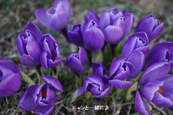 aoikurokkasu46.jpg