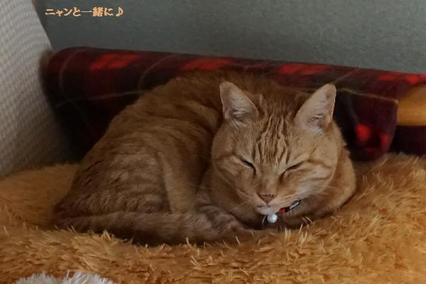 cyako4816.jpg