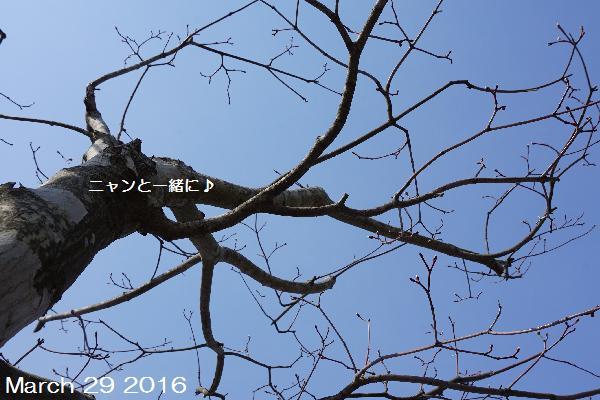 sora3291037.jpg