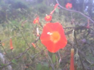 名前不明の花