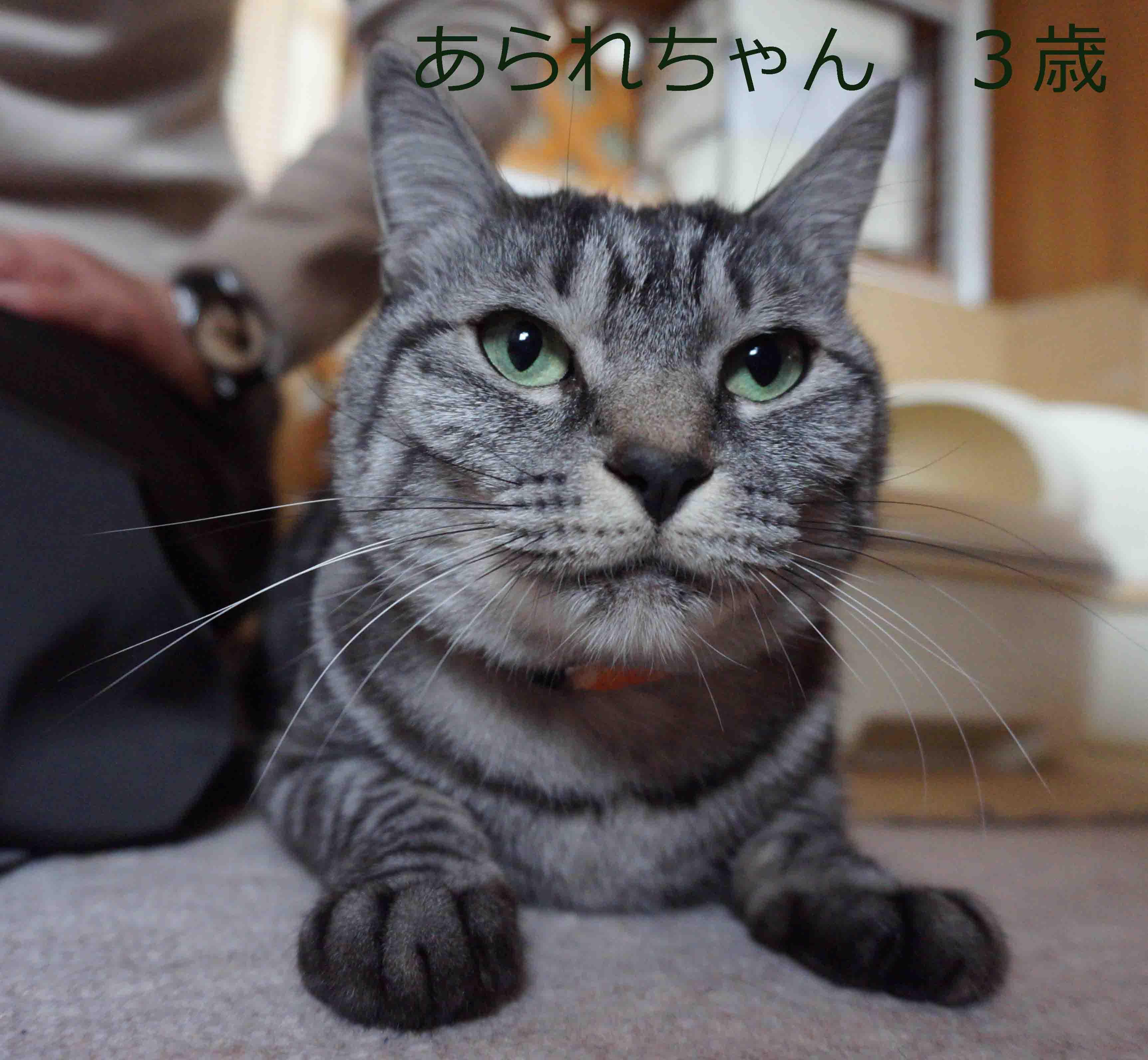 20160329001742bd3.jpg