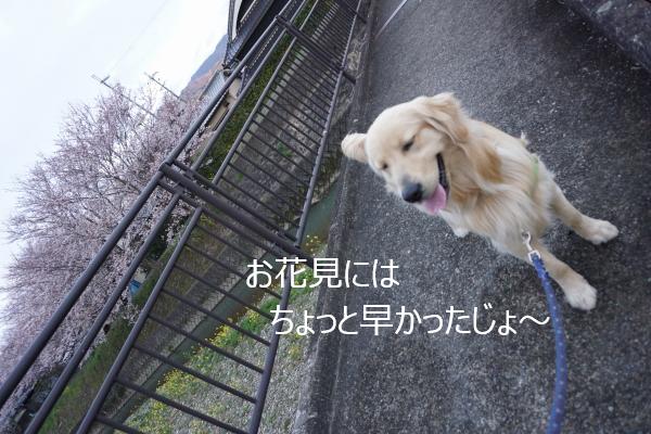 DSC01915.jpg