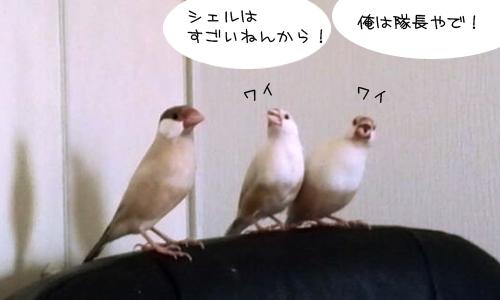 影の軍曹VSシェル隊長_1