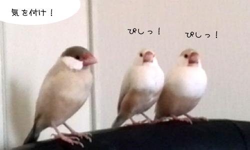 影の軍曹VSシェル隊長_2