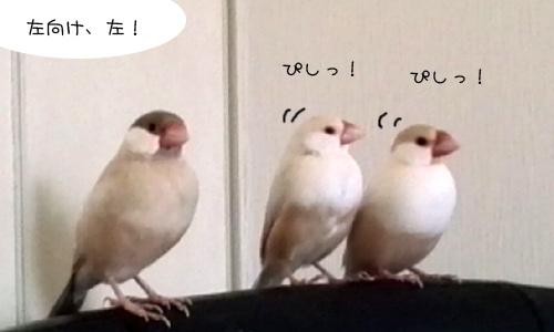 影の軍曹VSシェル隊長_3