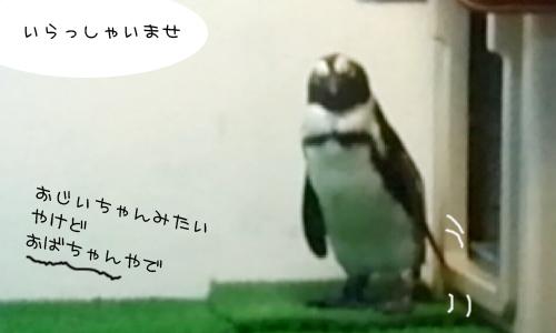 ペンギンのいるバー_2