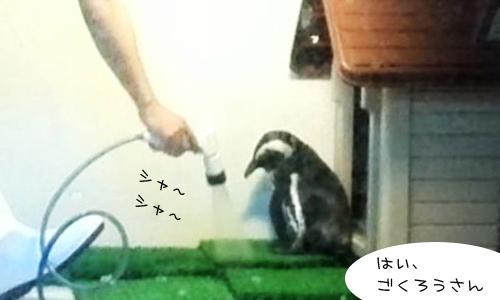 ペンギンのいるバー_8