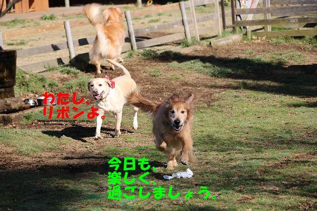 IMG_0665.jpg