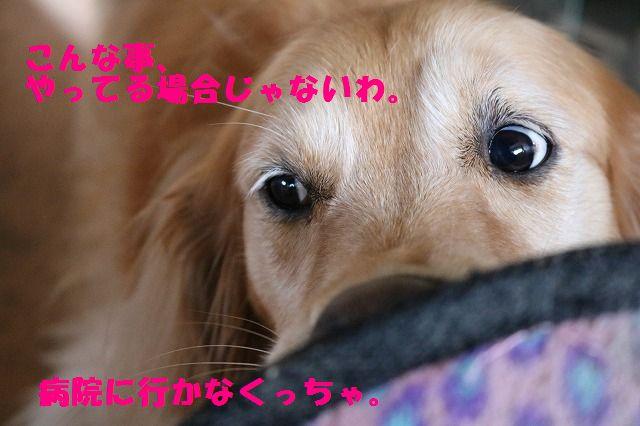 IMG_4359.jpg