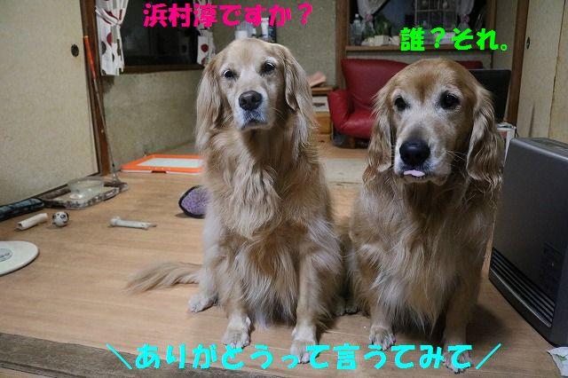 IMG_4488.jpg