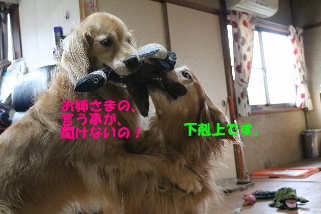 IMG_9568.jpg